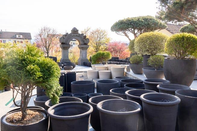 Pot berkualitas tinggi dan tanaman dalam pot adalah hal biasa.  Taman dan balkon menjadi lebih berharga bagi orang-orang yang menderita wabah ini.  Inilah alasan mengapa seseorang juga bersedia membelanjakan lebih dari sebelumnya, kata Ralph Hoffman.
