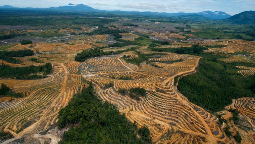Minyak sawit: Sri Lanka melarang impor dan pertanian