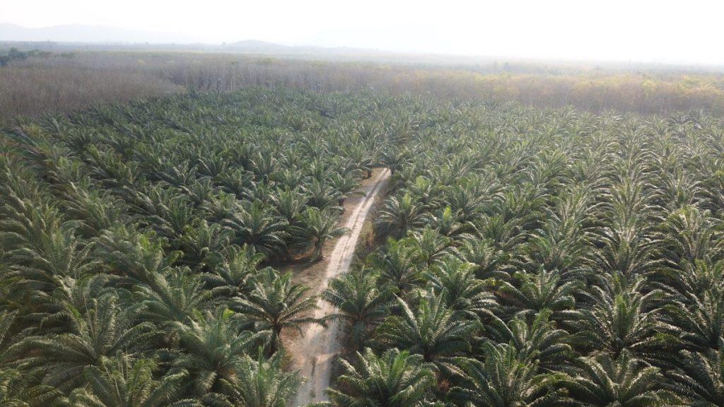 Produksi minyak sawit: Residu kelapa sawit masih dapat digunakan - ekonomis