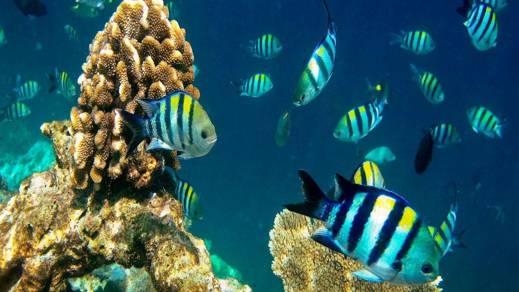 Melindungi lautan: harapan untuk 'ekonomi biru'