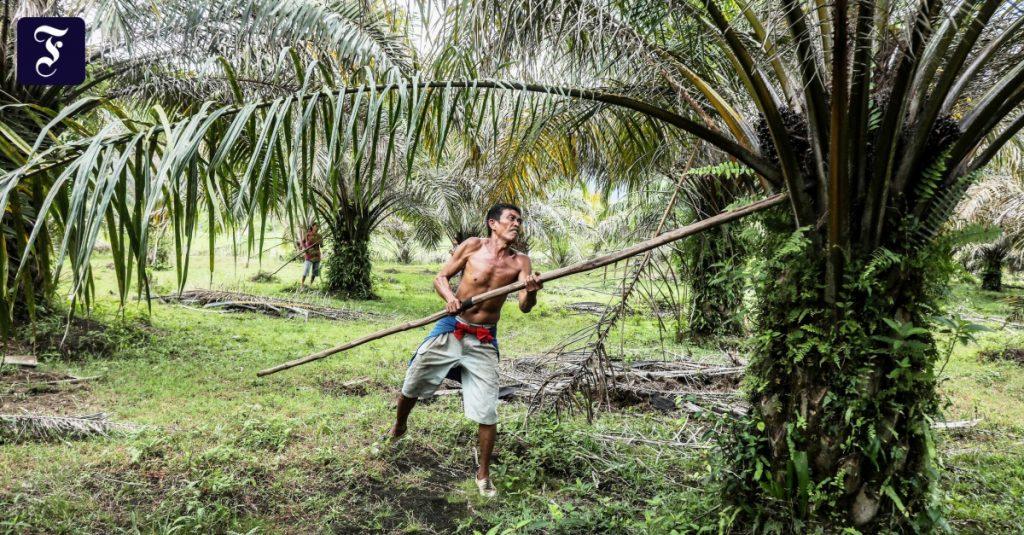 India ingin menanam kelapa sawit dalam skala besar