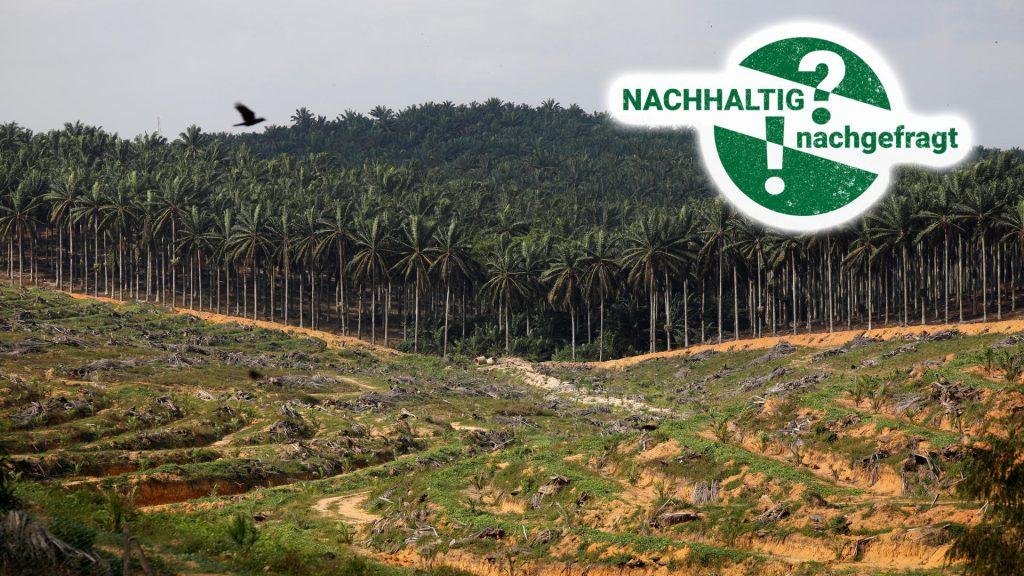 Mengapa Nutella County Tidak Akan Menyelamatkan Hutan Hujan